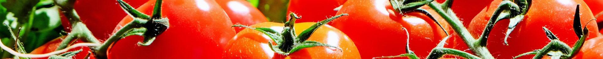 Greenhouse Tomato – Stoller Australia