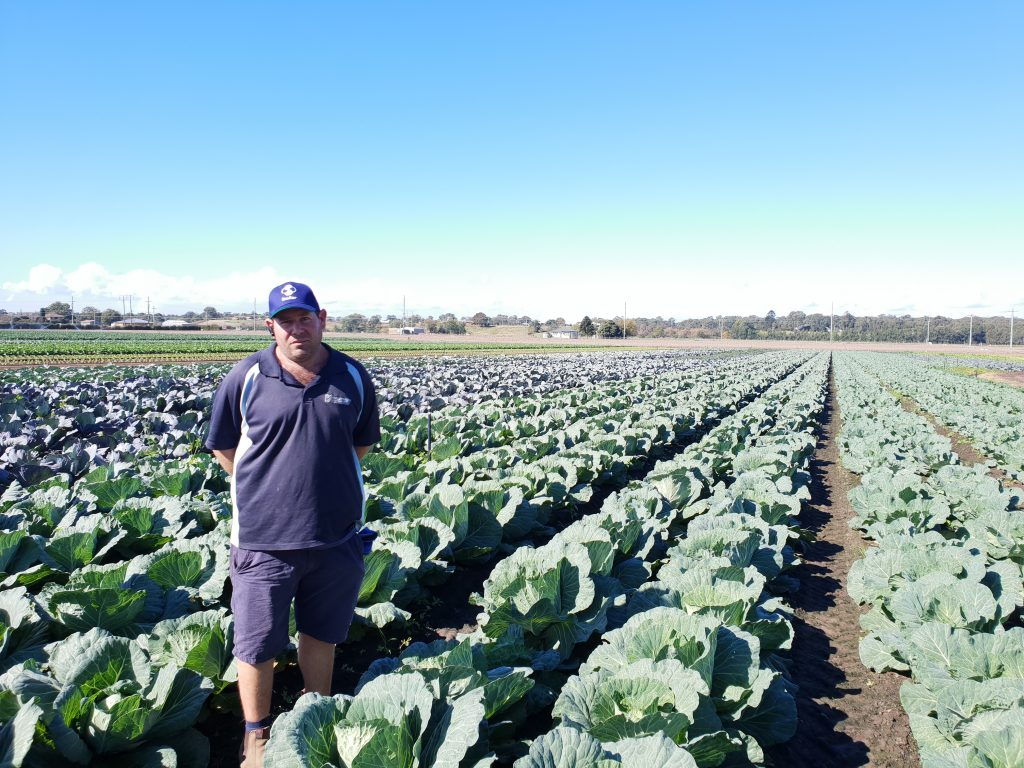 Grower Testimonial Image - Cabbage